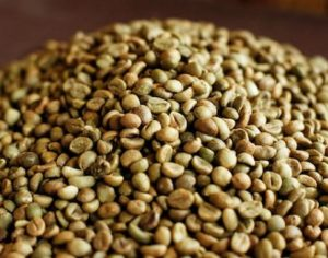 Gaobang Raw Robusta Coffee Beans S16 with Good Quality