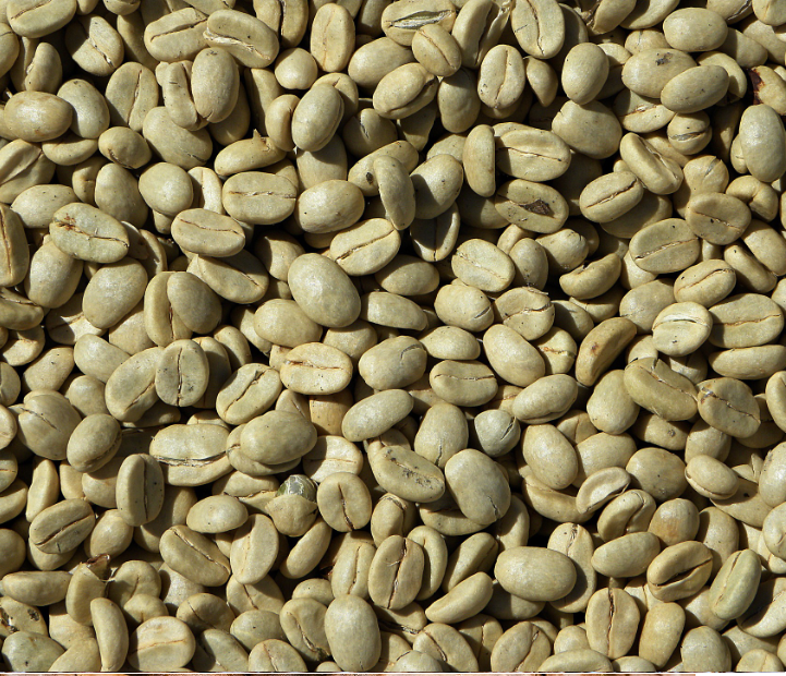 Aribica coffee bean S16
